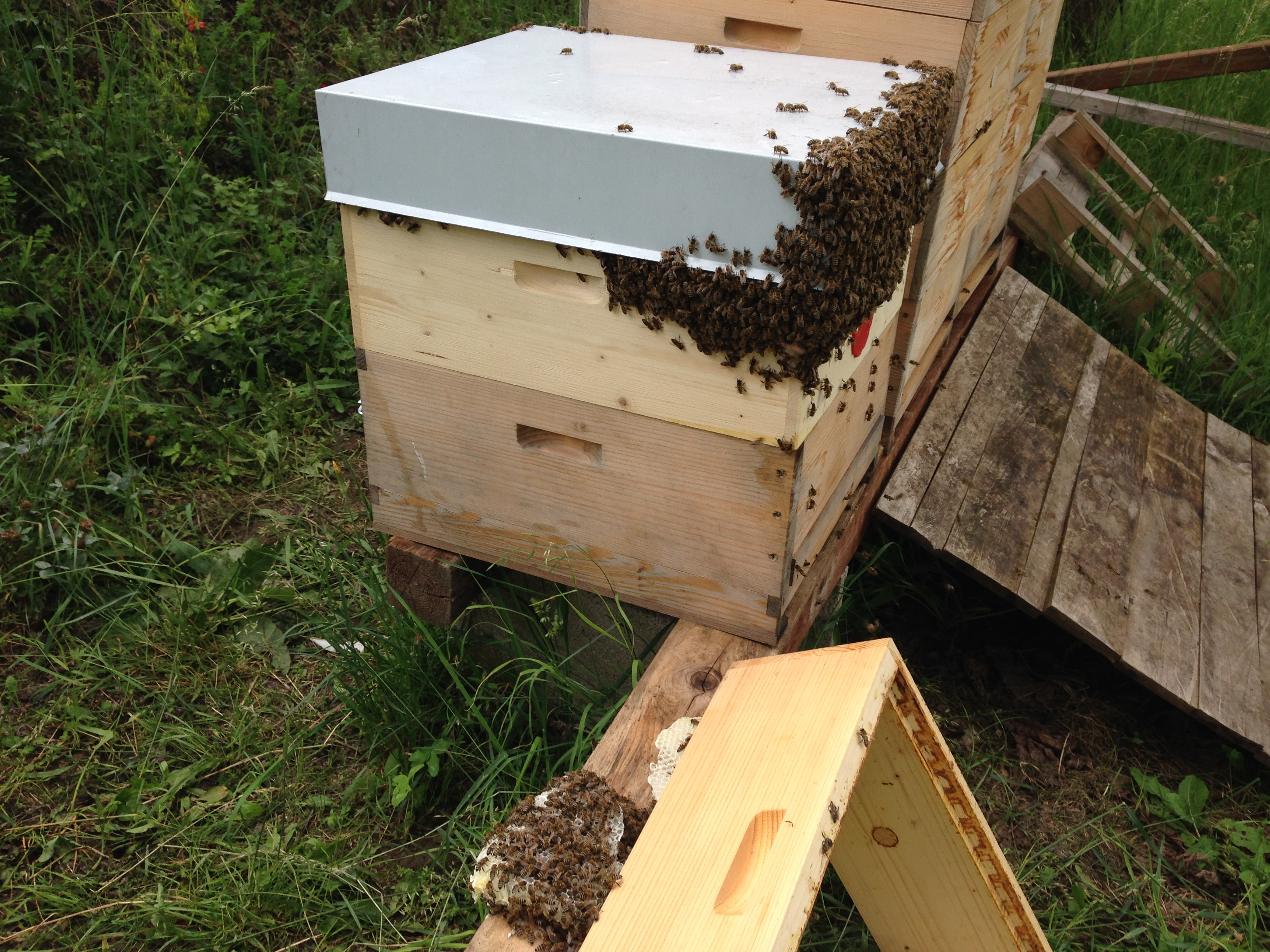 stockmitbienen