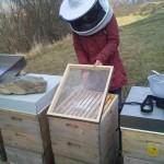 Bienen zuckern im Februar