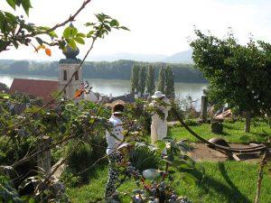 Honig Gold der Wachau - Honigwerkstatt Bienenpatenschaft