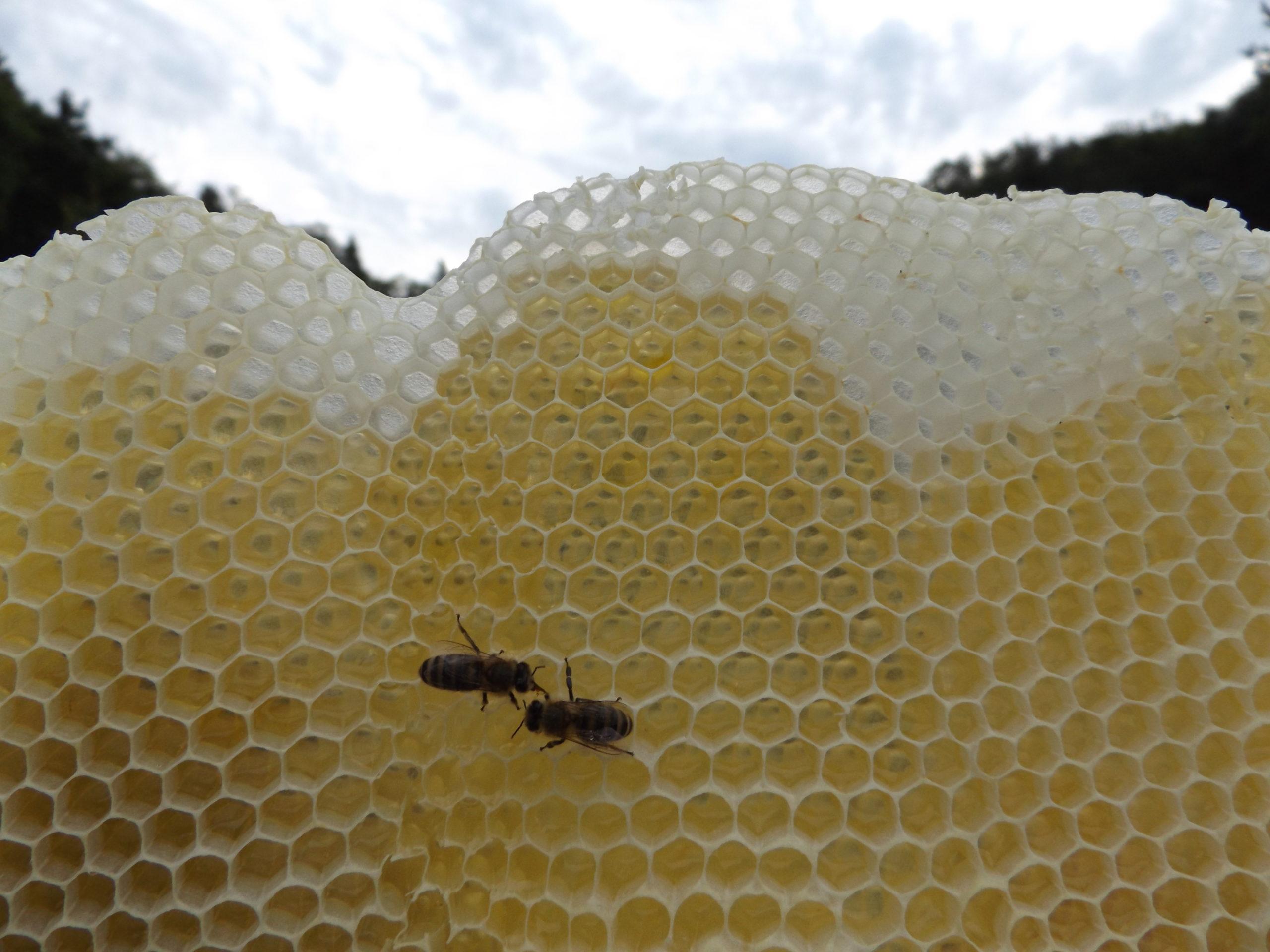 Bienentagebuch der HONIGWERKSTATT 2019