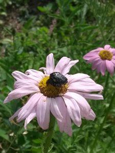 Insekten Bienen Honig im Bienengarten der HONIGWERKSTATT