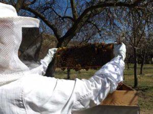 Bio Honig aus dem Wachauer Marillengarten