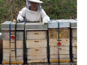 Honigwerkstatt Bienenvolk Marillen Wachau