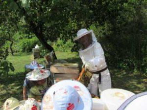 Kinder Bienen Schulen helfen dem Imker der Honigwerkstatt
