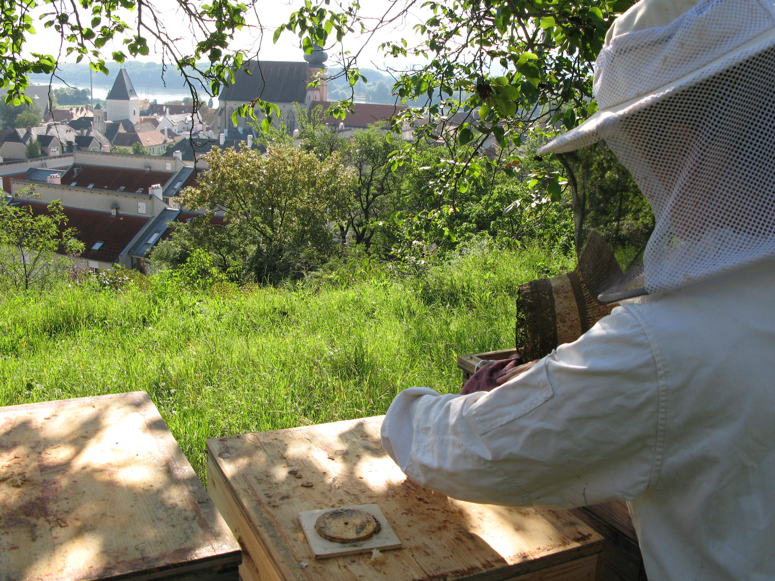 Bienenpatenschaft Bienen Pate